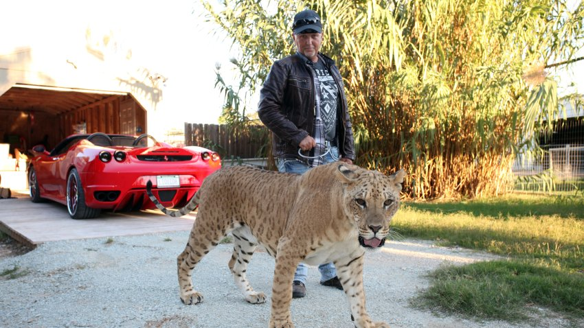 Jeff Lowe with Faith the liliger