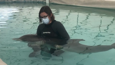 Marine Institute Rescues Stranded Dolphin Calf