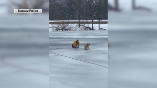 A firefighter rescued a Golden Retriever stranded in a partially frozen pond on Long Island