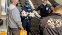 Dog Saved After Paw Gets Stuck in Moving Escalator at Journal Square PATH Station