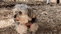 Adopt a New Pet with Little Shelter Animal Rescue