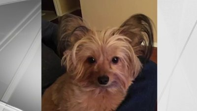 Staten Island Family Searches for Dog Missing After House Fire