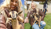 Animal Instincts: Family-Friendly Farms