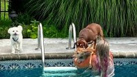 NY Woman Rescues Baby Deer Struggling to Swim That Fell Into Family Swimming Pool