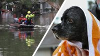 Over 100 Animals Arrive in NY & NJ Shelters After Ida: Here's How You Can Help