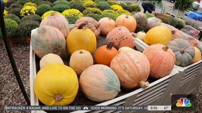 Produce Pete: Pumpkins