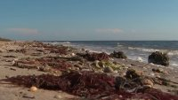 Long Island Beaches Stink — And the Rotten Egg Stench Is Coming from Seaweed