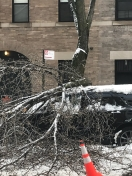 <b>Tree Smashes Car in Fort Greene, Brooklyn</b>