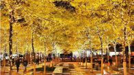 YOUR PHOTOS: Autumn in New York