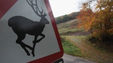Hunter Mistakes Woman for Deer, Shoots and Kills Her: Police