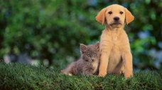 Clear the Shelters: Find One in Tri-State Near You