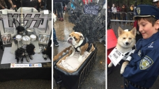Pooches Sniff Out Best Costume Title in NYC Parade
