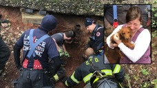Dog Stuck in Pipe Nearly 24 Hours; See Rescue, Happy Reunion