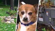 Lightning Causes $30K of Damage to Long Island Animal Shelter