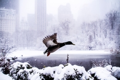 Your Wintry Weather Photos