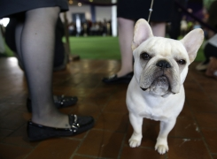 Top 10 Dog Breeds in NYC
