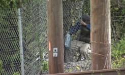 Neighbors Fear Tragedy from Fence Holes Along Rail Tracks