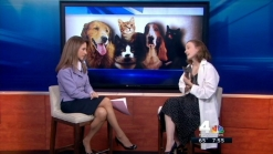 Pet Safety in High-Rise Buildings