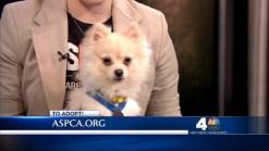 ASPCA: Pet of the Week