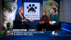 Alliance for NYC's Animals, Whiskers in Wonderland
