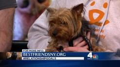 Best Friends Animal Society: Valentine's Day -