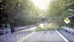 Dashcam Captures Tree Fall on NJ Police Officer