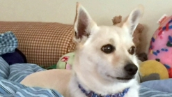 Family Says Someone Swiped Their Dog in Manhattan