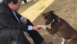 #JusticeForCaitlyn: Dog Muzzled With Electrical Tape Heals