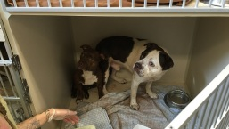 PHOTOS: Dogs Removed From NJ Home