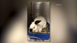 Nearly 300 Rabbits Rescued From California Home