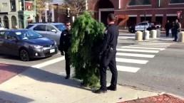 Man Dressed as Tree Blocks Traffic