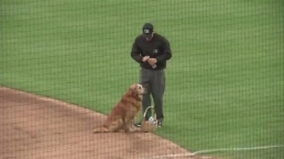 Dog Delivers Basket of Water on Baseball Field