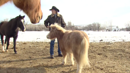 Benton City Man Fights for Rights To Use Service Horse