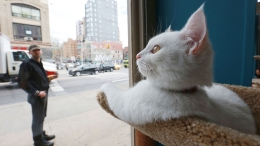 Pop-Up Cat Cafe Opens in NYC