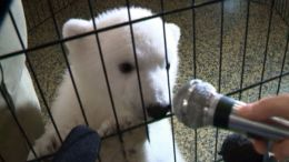 Polar Bear Cub Too Cute For Words