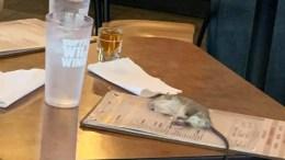 Big Rat Drops From Ceiling Onto Customer's Menu