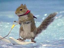 Skiing Squirrel