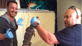 Search Warrant Turns Up the Unexpected: a Gator