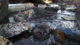 IOC to Order Tests for Viruses at Rio's Olympic Water Venues