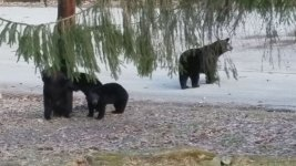 Bears Out of Hibernation in February, Play in NJ Yard