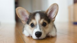 Dogs and Apartments: How to Make It Work