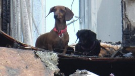 Dogs Found Alive 1 Day After Fire