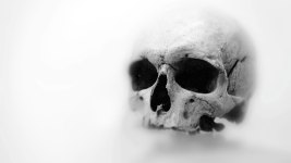 Man Brings Human Skull in Florida Grocery Store