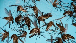 Mosquitoes Thrive in US, Don't Blame Climate Change: Study