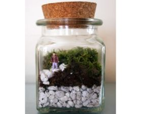 Le Petit Singularite's Terrarium Kit