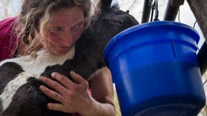 Sick, Abandoned Horses Get Some Love at Last Chance Corral
