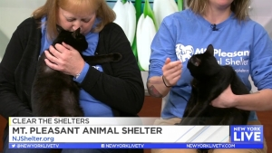 Clear the Shelters with Mt. Pleasant Animal Shelter