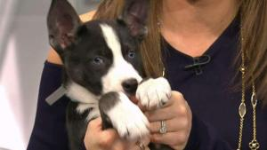 Clear the Shelters with North Shore Animal League America