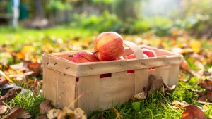 Got a Haul of Apples for Fall? Here's What to Do With Them