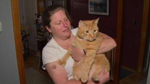 'Disbelief': Family Reunited With Missing Cat After 7 Years